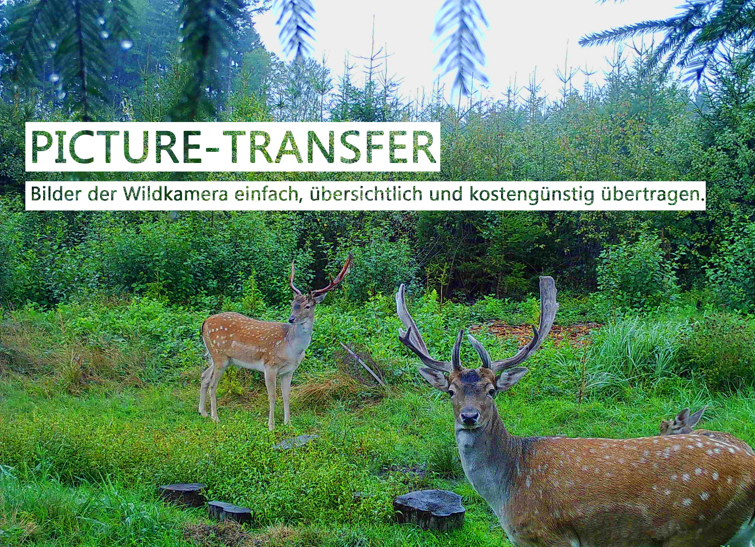 picture-transfer_V2